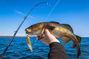 Citrus County Fishing Guide