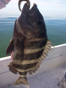 Homosassa fishing report January 2018